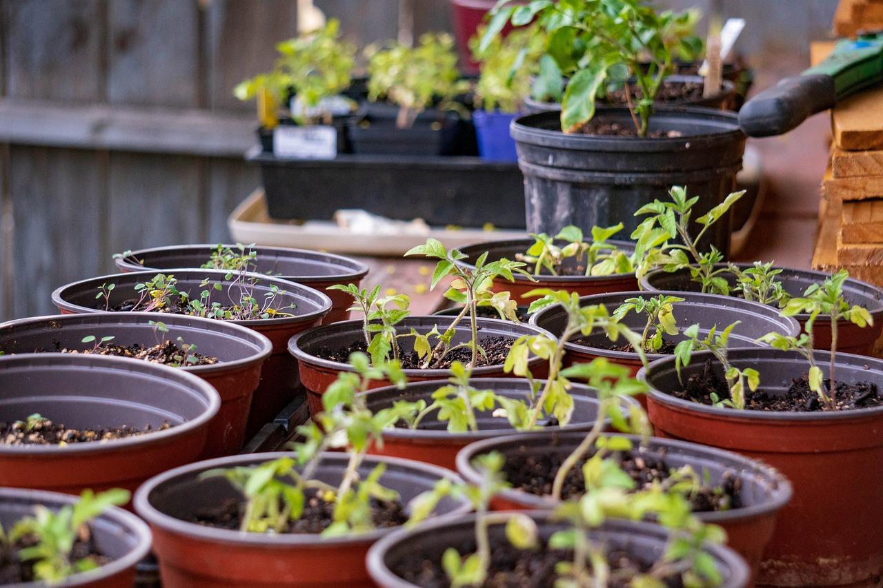 Как сохранить луковицы и саженцы до весны
