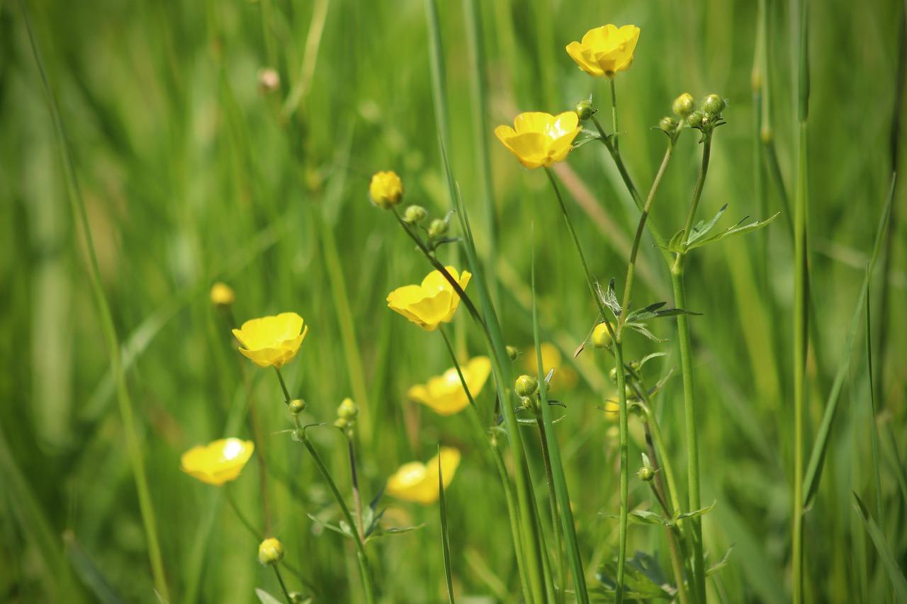 Декоративные растения, которые не следует сажать в саду